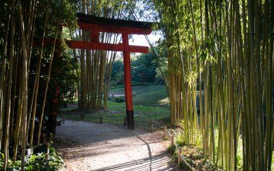 Qu'ils sont beau ces bambous !