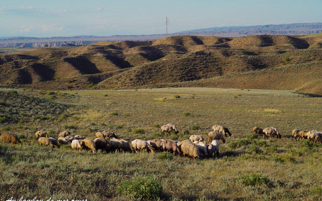 Un lieu de camping parfait entouré de moutons et de serpents …